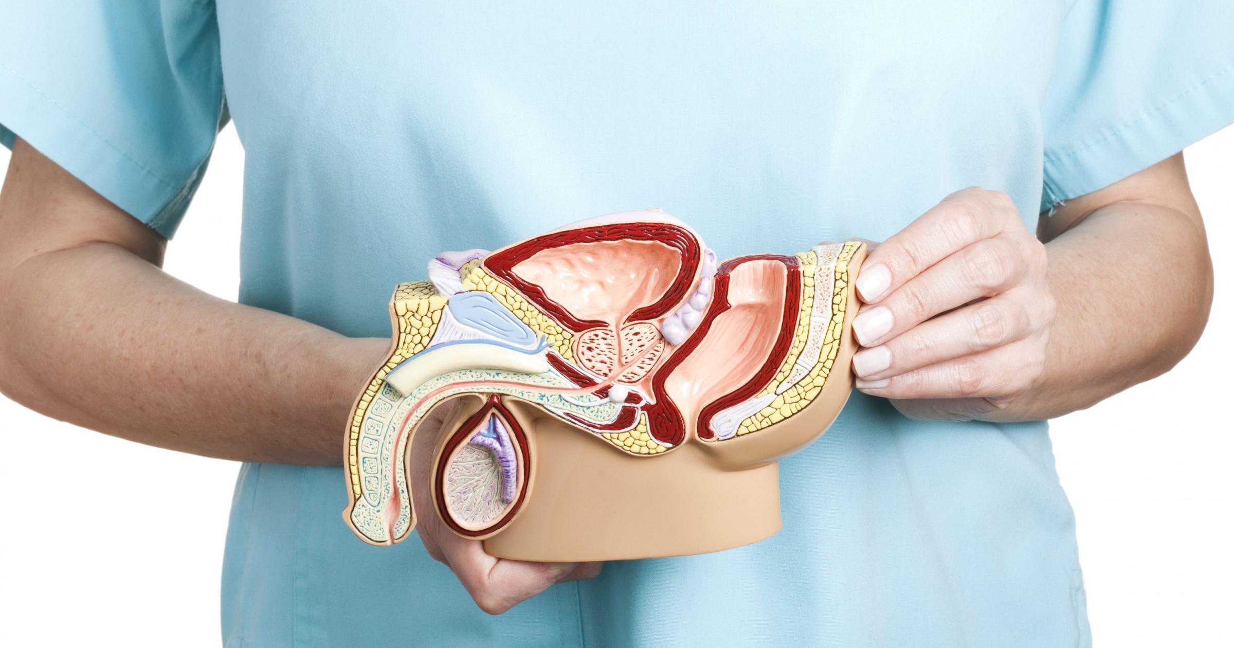 L-аргинин плюс экстракт сосновой коры против эректильной дисфункции